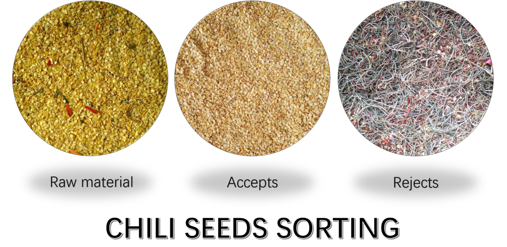 chili seeds sorting.png