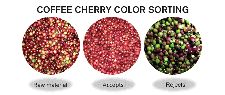 Coffee Cherry Color Sorting.png