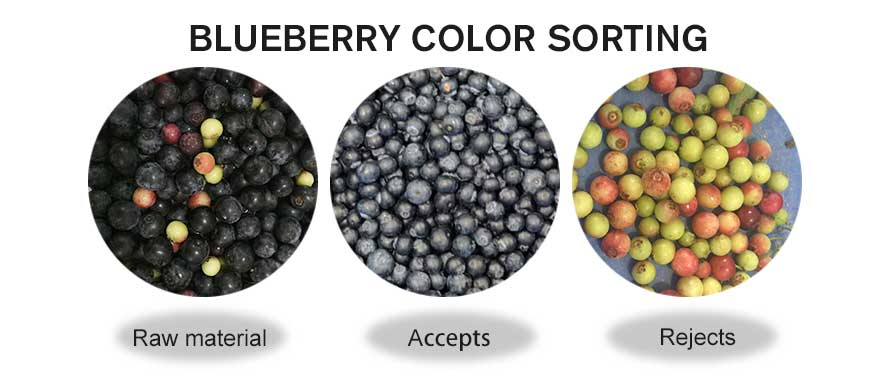 blueberry color sorting.jpg